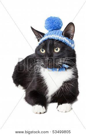 Black Cat In A Winter Hat