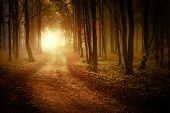 stock photo of fog  - Sunrise in a forest in autumn with fog - JPG