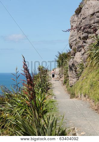 Woman Hike The Mount At Tauranga In Nz