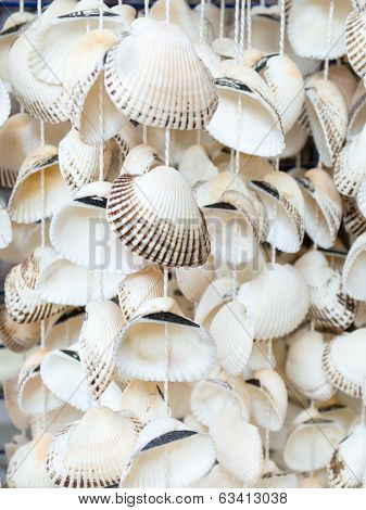 Seashells, A Typical Souvenir Of The Black Sea