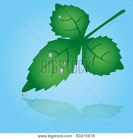 green leaf and dew  eps10
