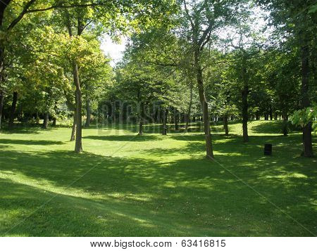 Dappled sunlight falling onto a grassy glade in a wooded park