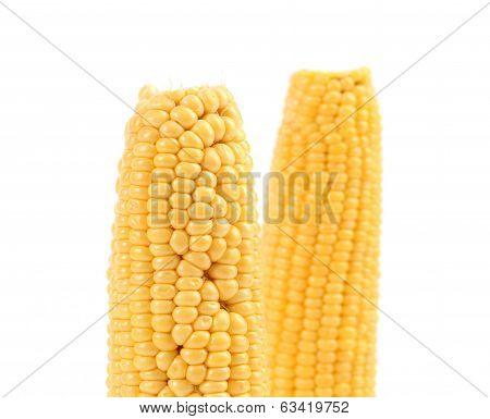 Two corncobs on white.