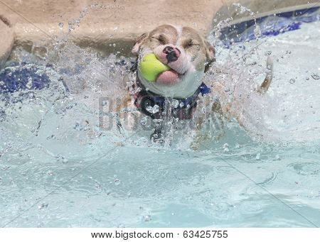 Dog with a tennis ball in the water