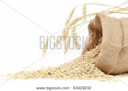 Sack with grains and ear of wheat.