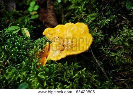 Mushrooms in the woods 5