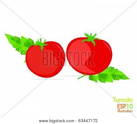 Tomato - Illustration