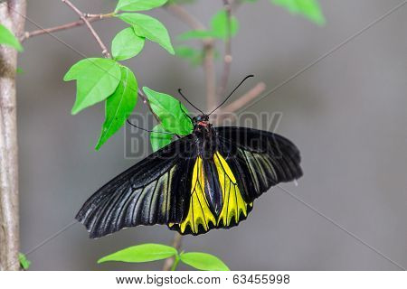 Beautiful Butterfly Perched On A Leaf.