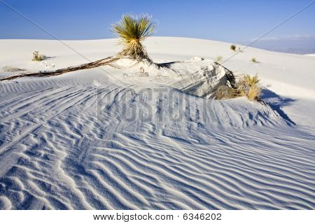 White Dunes National Monument