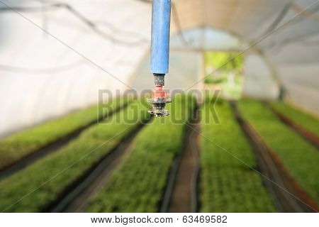 Greenhouse For Vegetables - Irrigation