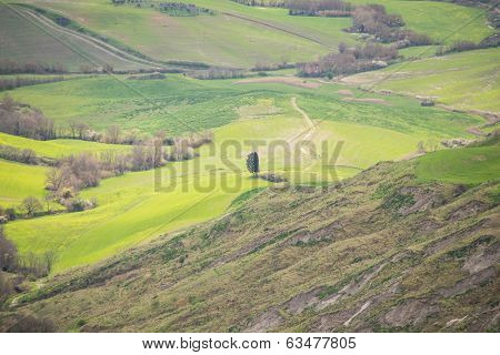 Green Fields Of Tuscany Countryside
