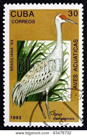 Postage Stamp Cuba 1993 Sandhill Crane, Bird