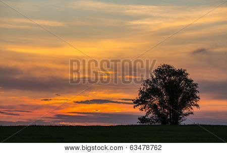 Beautiful landscape with trees silhouette