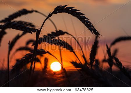 Grass Silhouette Against Sunset