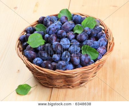 Freshly Picked Damson Plums