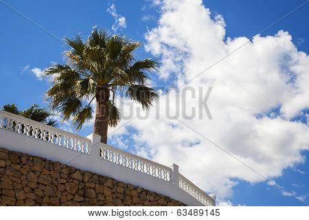 Palm Trees, Blue Sky & Hot Sunny Day