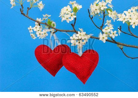 Red hearts hanging from pear tree branch with blossoms