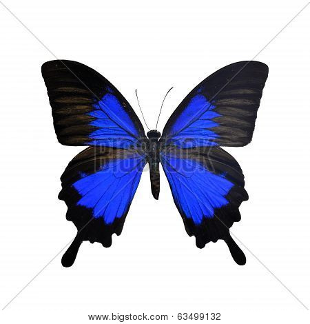 Beautiful Black And Blue Butterfly