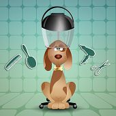 image of grooming  - little dog to the hairdresser for grooming - JPG