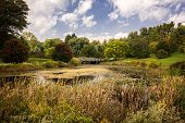picture of cattail  - A beautiful autumn scene at a pond with Cattails - JPG