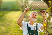 stock photo of hoe  - Portrait of a handsome senior man gardening in his garden - JPG