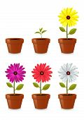 image of flower pots  - flower pot - JPG