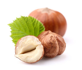 picture of cobnuts  - Hazelnuts with leaf  in closeup - JPG