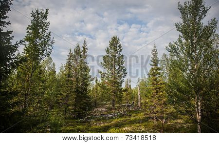 A north tundra in summer
