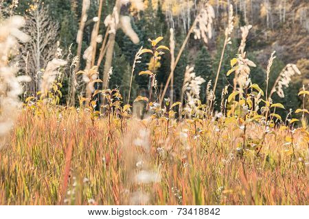 Mountain Grasses glow in Autumn Sunset