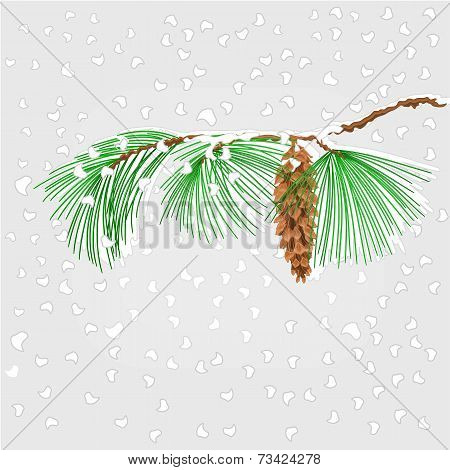 Pine Branch With Snowflakes Christmas Theme Vector