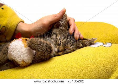 Girl Caresses Cute Sleeping Kitten