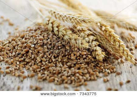 Whole Grain Wheat Kernels Closeup