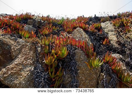 The Plant On The Rocky Soil