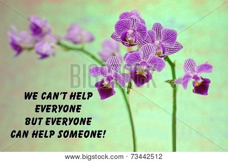 Purple orchid quote