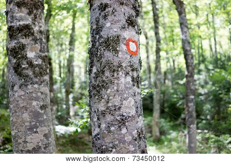 Hike mark painted on tree bark, hiking signs, hiking marks. Red and white hike path symbol