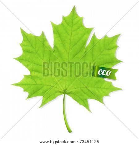 Green Leaf, Vector Illustration