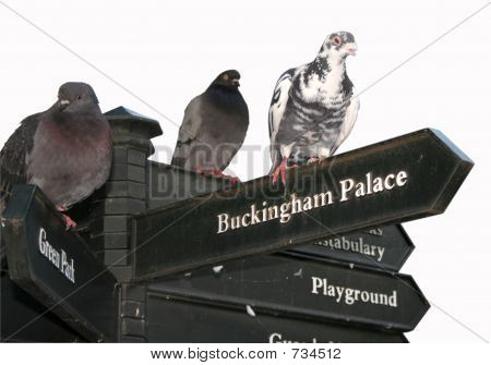 Pigeons on a London signpost