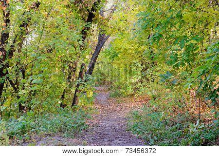 Sunny Autumn Forest