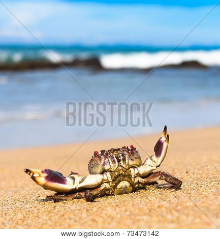 Seafood Posing Menacing Eyes