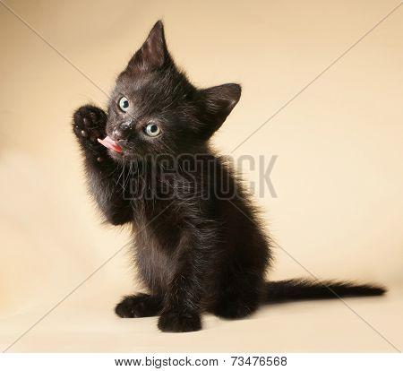 Black Kitten Sitting And Licking On Yellow