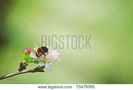 Vintage Bee