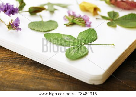 Dry up plants on notebook on wooden background