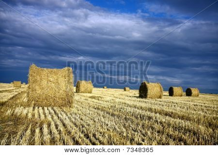 bales of hey on the agriculture field