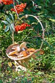 pic of mountain-ash  - Mushrooms and red mountain ash in basket - JPG
