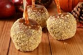 picture of ground nut  - Caramel apples with nuts on a holiday table with a decorative pumpkin - JPG