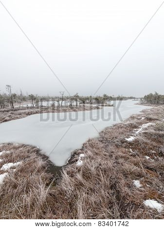 Snowy Landscape In Frosty Winter Bog