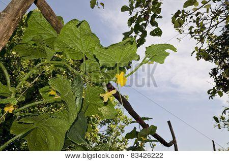 Growing Bio Vegetables In The Northern Bulgaria