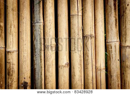 Bamboo Background Hard Light