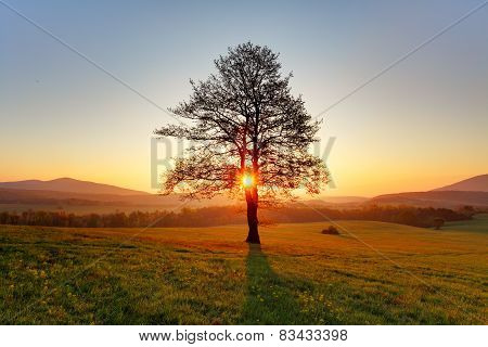 Spring Landscape With Tree And Sun
