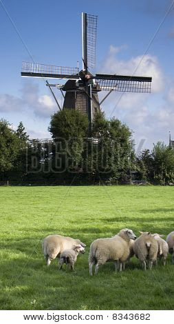 Wind Mill In Netherlands